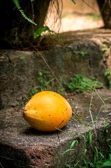 Gele koninklijke kokosnoot