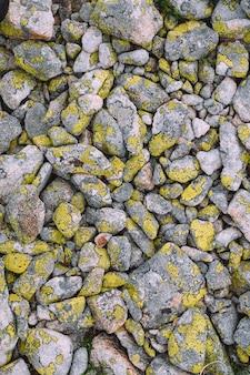 Gele korstmostextrure op grijze stenenachtergrond