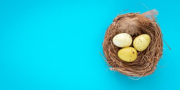 Gele kwarteleitjes in een nest op een turkooizen achtergrond.