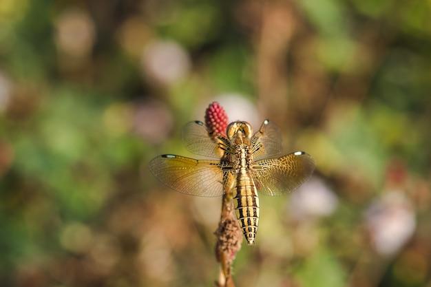 Gele libellen zijn op het stuifmeel van rode bloemen in de natuur.