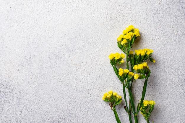 Gele limonium-bloem op wit