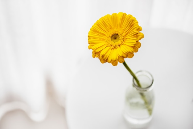 Gele madeliefjegerbera in glazen vaas op witte tafel