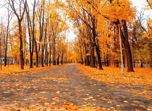 Gele marple bladeren op zwarte asfaltweg met kopie ruimte voor tekst.