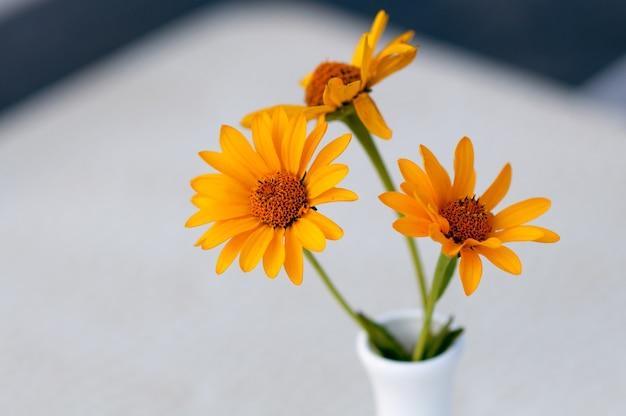 Gele mooie bloemen op de achtergrond