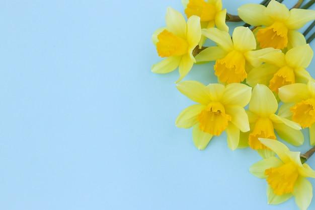 Gele narcissen bevinden zich op een blauwe achtergrond