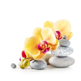 Gele orchidee bloemen en spa stenen geïsoleerd op een witte achtergrond uitknippad inbegrepen