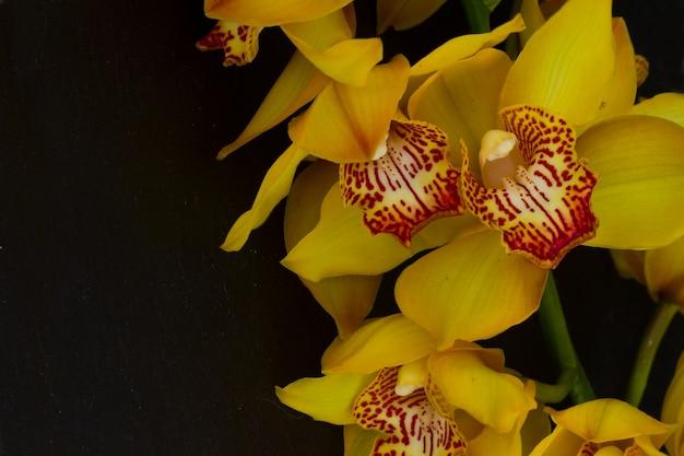 Gele orchidee bloemen grens op zwarte achtergrond