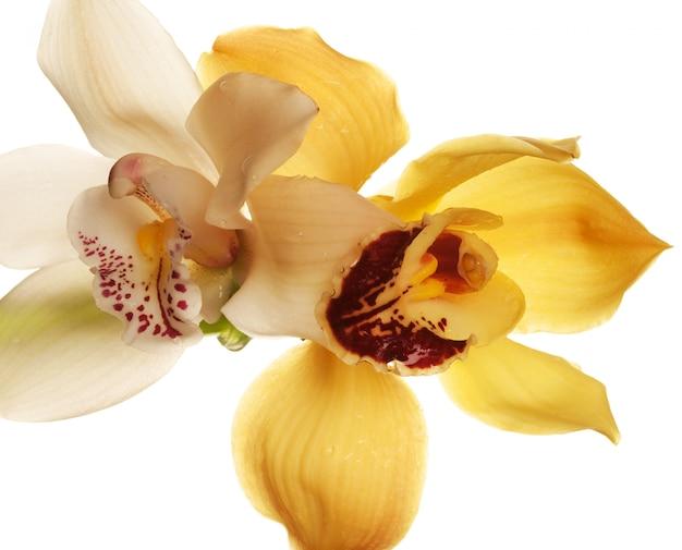 Gele orchideeclose-up