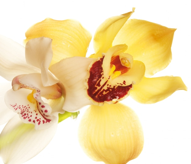 Gele orchideeclose-up