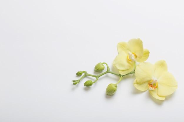 Gele orchideeën bloemen