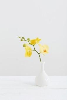 Gele orchideeën in vaas op wit