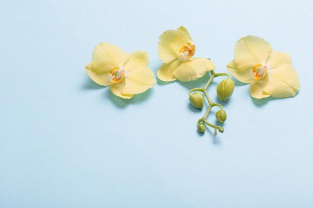 Gele orchideeën op blauw papier achtergrond