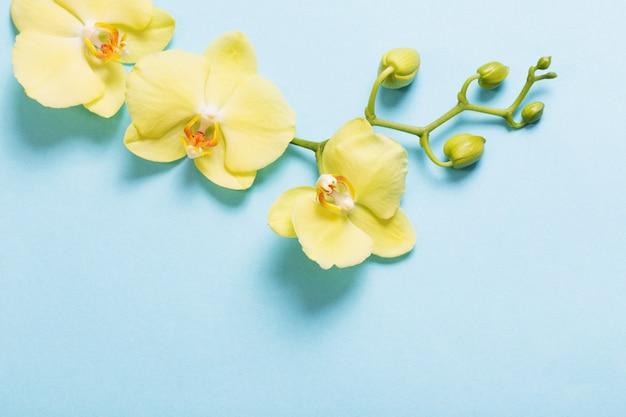 Gele orchideeën op blauw papier