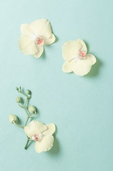 Gele orchideeën op groenboekachtergrond