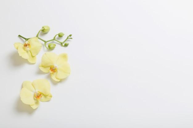 Gele orchideeënbloemen op wit oppervlak