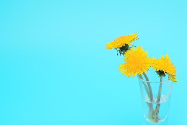 Gele paardebloemen bloemen in een klein glas met water op blauwe achtergrond met kopie ruimte voor tekst.