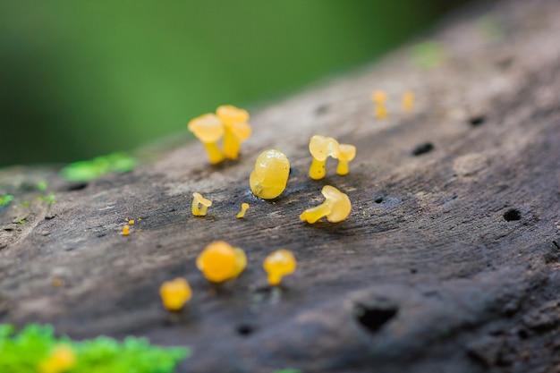 Gele paddestoel op droog hout in het bos