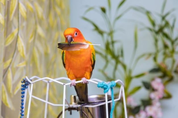 Gele papegaai houdt een veer vast