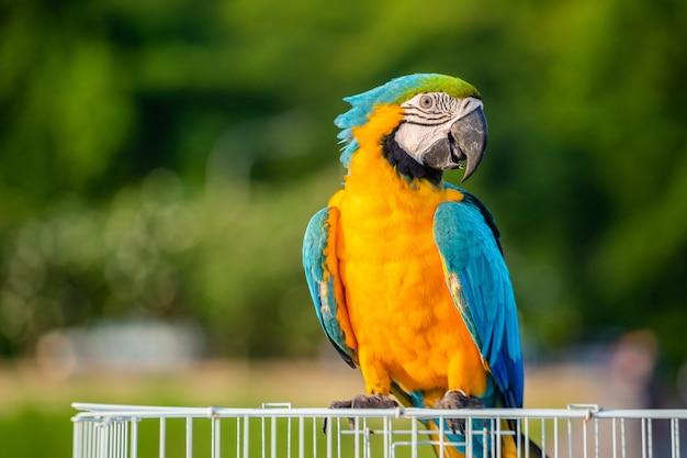 Gele papegaai met blauwe vleugels
