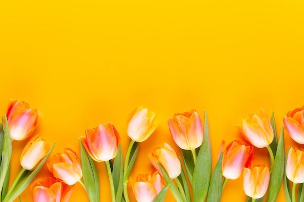 Gele pastelkleuren kleuren tulpen op gele achtergrond.