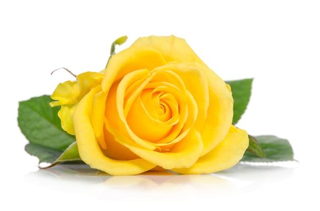 Gele roos knop