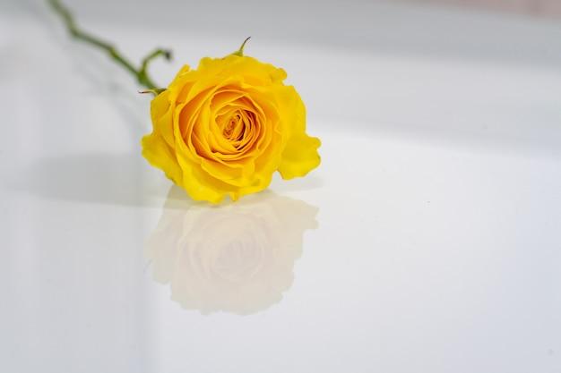Gele roos op een glanzend licht oppervlak met reflectie