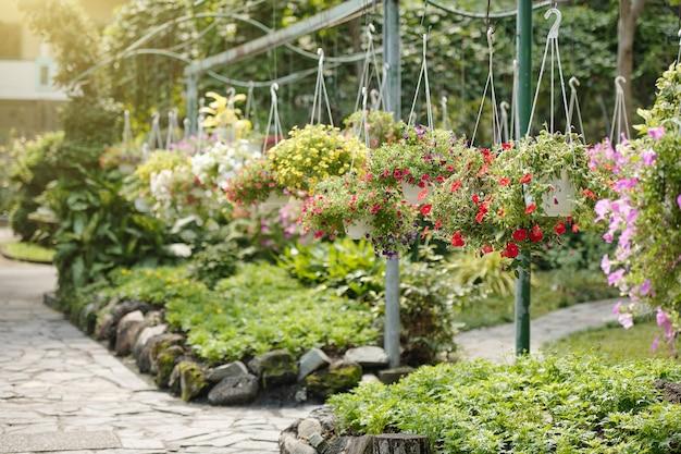 Gele, roze en paarse petunia bloemen in hangende potten in kas of openbaar park