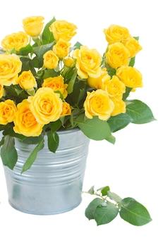 Gele rozen met groene bladeren in metalen pot close-up geïsoleerd op wit
