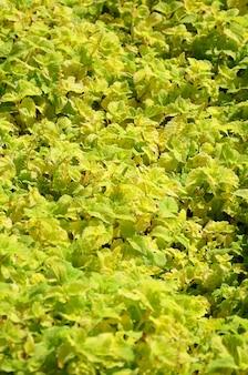 Gele siernetelinstallatie in een tuin