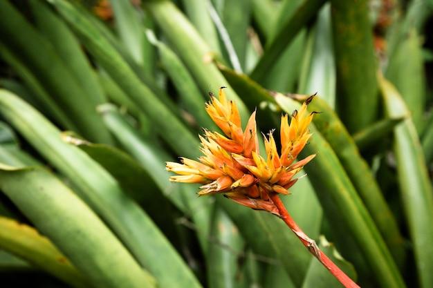 Gele tropische bloem met vage achtergrond