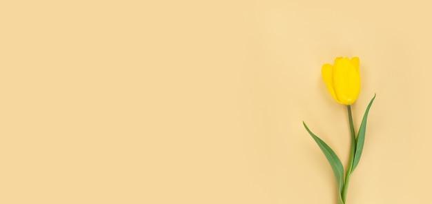 Gele tulp op een beige achtergrond. mimimalistische plat leggen met kopie ruimte.