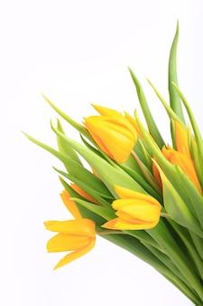 Gele tulpen geïsoleerd op een witte achtergrond.