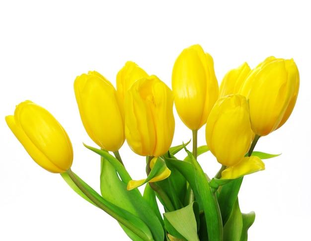 Gele tulpen geïsoleerd op witte achtergrond