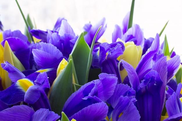 Gele tulpen met de irissen