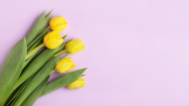 Gele tulpen op een paarse achtergrond