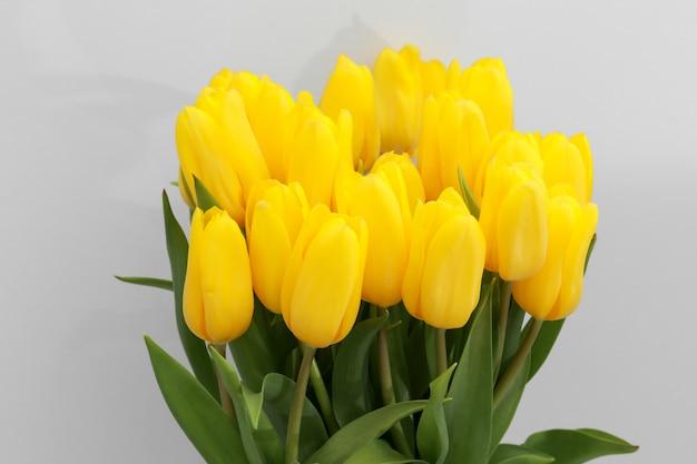 Gele tulpenbloemen die op witte achtergrond worden geïsoleerd
