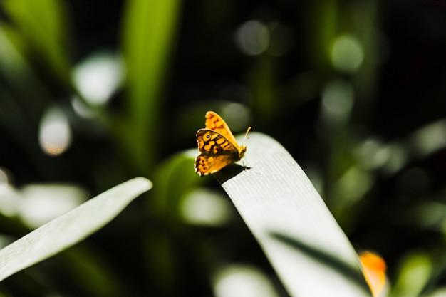 Gele uiterst kleine vlinder op groen blad in zonlicht