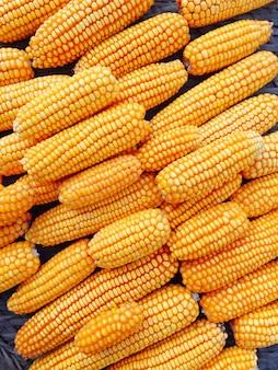 Gele verse en suikermaïs voor voedselverwerking