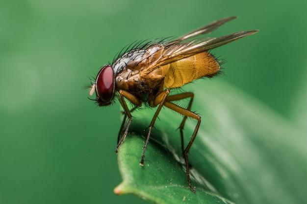 Gele vlieg op het blad