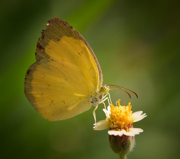 Gele vlinder op bloem in de tuin
