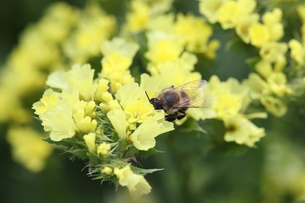 Gele wilde bloemen in tuinbloemen die het hele zomerconcept bloeien