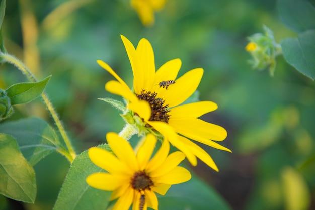 Gele zonnebloem en kleine bij