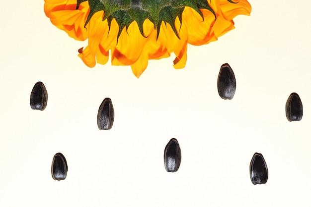 Gele zonnebloem en zonnebloempitten op een witte achtergrond