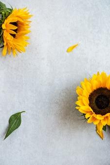 Gele zonnebloem op gray background, autumn concept