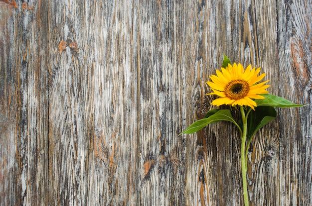 Gele zonnebloem op vintage getextureerde houten tafel.