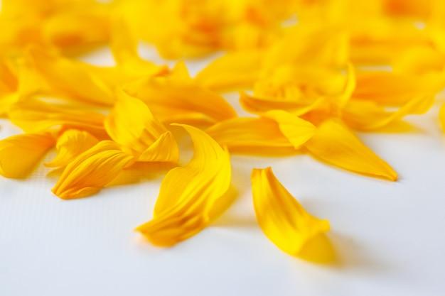 Gele zonnebloembloemblaadjes op een witte achtergrond met een mooi bokehclose-up
