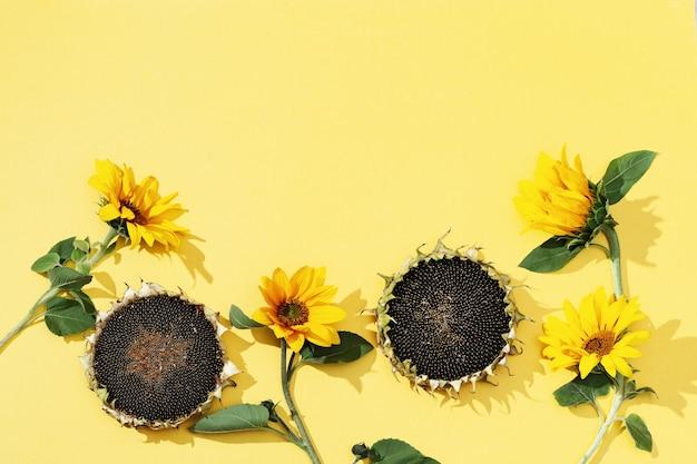 Gele zonnebloemen en zwarte zaden