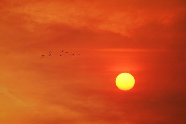 Gele zonsondergang op de avond oranjerode donkere wolk aan de hemel en vogels die naar huis vliegen