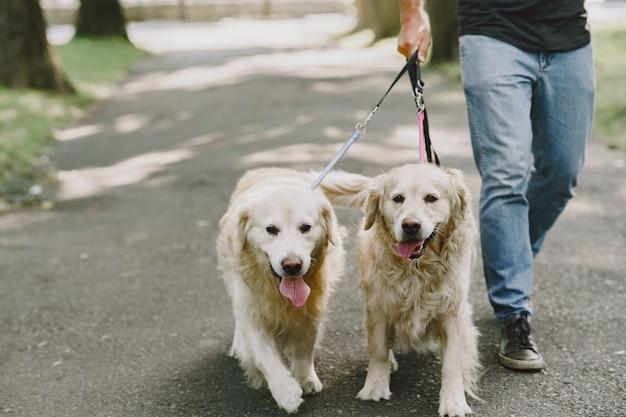 Geleidehond helpt blinde man in de stad. knappe blinde man rust met golden retriever in de stad.