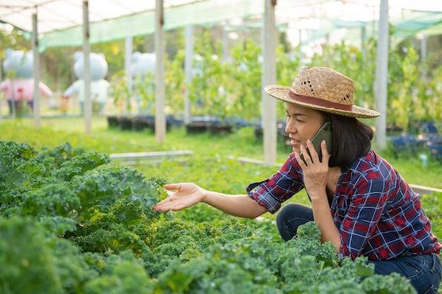 Gelukkig aziatische vrouw boer oogst en het controleren van verse boerenkool sla plant, biologische groente in tuin in kwekerij boerderij. bedrijfs- en boerderijmarktconcept. boerin met behulp van mobiele telefoon.